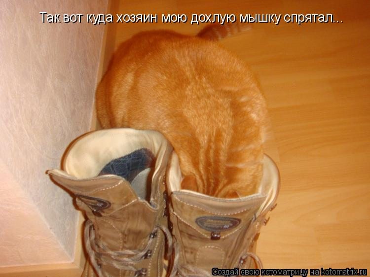 Котоматрица: Так вот куда хозяин мою дохлую мышку спрятал...