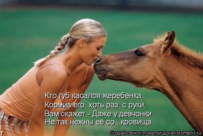 Котоматрица: Кто губ касался жеребёнка, Кормив его, хоть раз, с руки, Не так нежны её со...кровища Вам скажет - Даже у девчонки