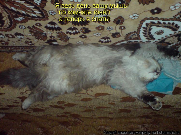 Котоматрица: Я весь день вашу мышь- по комнате гонял а теперь я спать!