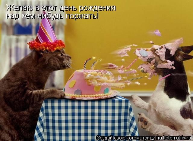 Котоматрица: Желаю в этот день рождения  над кем-нибудь поржать!