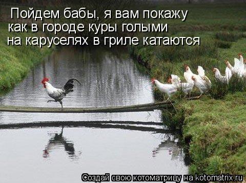 Котоматрица: Пойдем бабы, я вам покажу как в городе куры голыми  на каруселях в гриле катаются