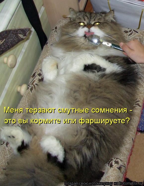 Котоматрица: Меня терзают смутные сомнения -  это вы кормите или фаршируете?