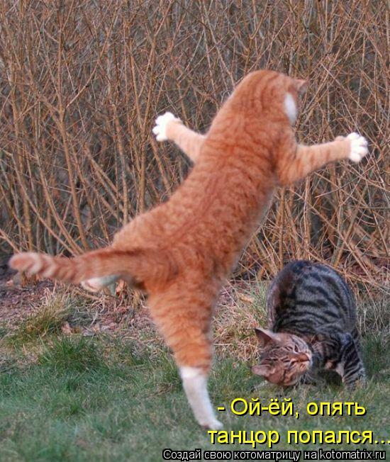 Котоматрица: - Ой-ёй, опять  танцор попался...