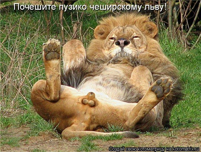 Котоматрица: Почешите пузико чеширскому льву!