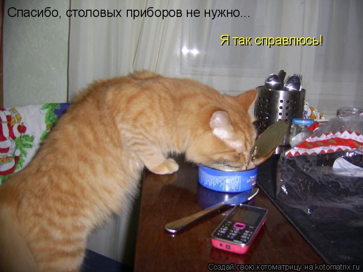 Котоматрица: Спасибо, столовых приборов не нужно... Я так справлюсь!