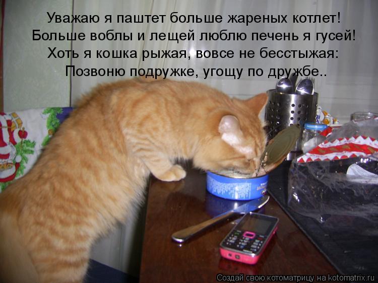 Котоматрица: Уважаю я паштет больше жареных котлет! Больше воблы и лещей люблю печень я гусей! Хоть я кошка рыжая, вовсе не бесстыжая: Позвоню подружке, у