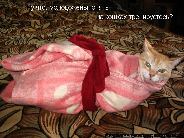 Котоматрица: Ну что. молодожены, опять на кошках тренируетесь?