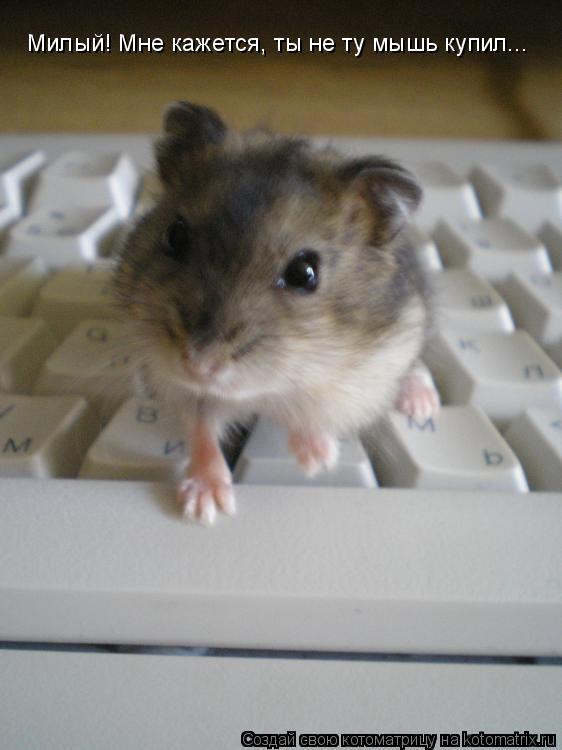 Котоматрица: Милый! Мне кажется, ты не ту мышь купил...