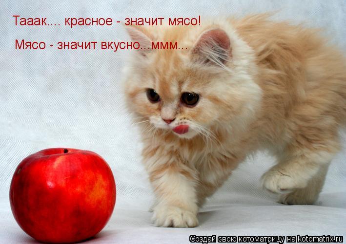 Котоматрица: Тааак.... красное - значит мясо!  Мясо - значит вкусно...ммм...