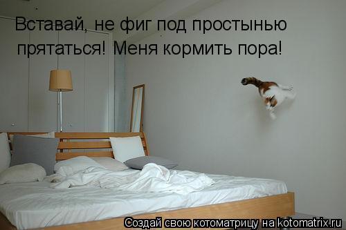 Котоматрица: Вставай, не фиг под простынью прятаться! Меня кормить пора!