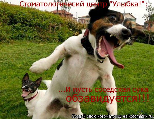 """Котоматрица: Стоматологичесий центр """"Улыбка!"""": ...И пусть соседская сука  обзавидуется!!!"""