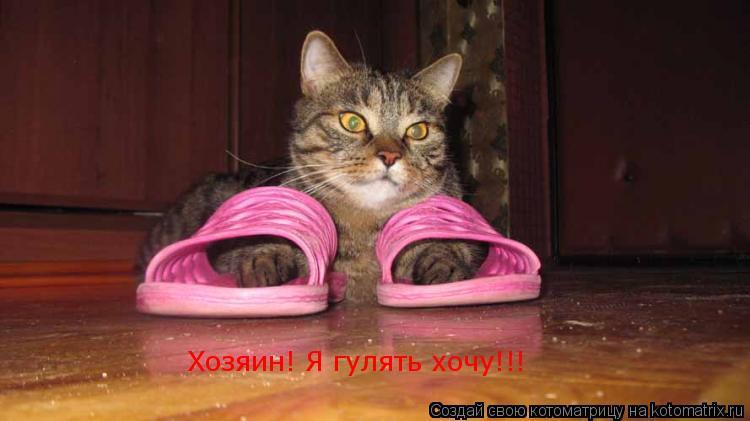Котоматрица: Хозяин! Я гулять хочу!!!