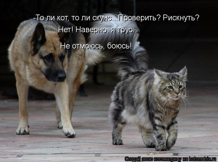 Котоматрица: -То ли кот, то ли скунс...Проверить? Рискнуть?  Нет! Наверно, я трус: Не отмоюсь, боюсь!