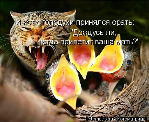 """Котоматрица: И кот с голодухи принялся орать: """"Дождусь ли,  когда прилетит ваша мать?"""""""