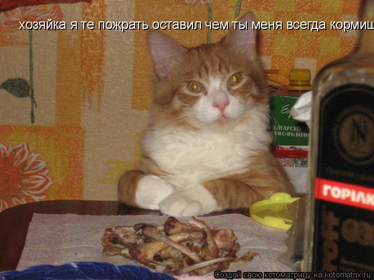Котоматрица: хозяйка я те пожрать оставил чем ты меня всегда кормиш.