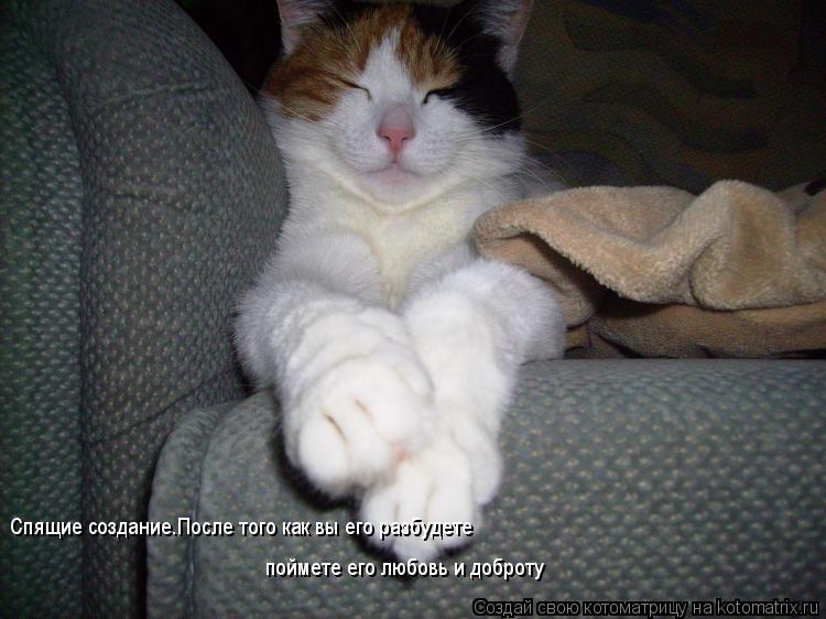 Котоматрица: Спящие создание.После того как вы его разбудете поймете его любовь и доброту