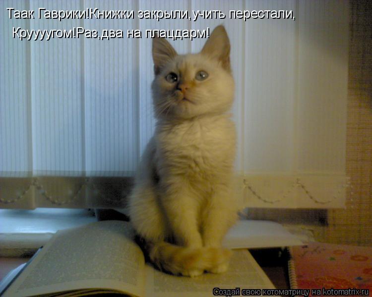 Котоматрица: Таак Гаврики!Книжки закрыли,учить перестали, Круууугом!Раз,два на плацдарм!