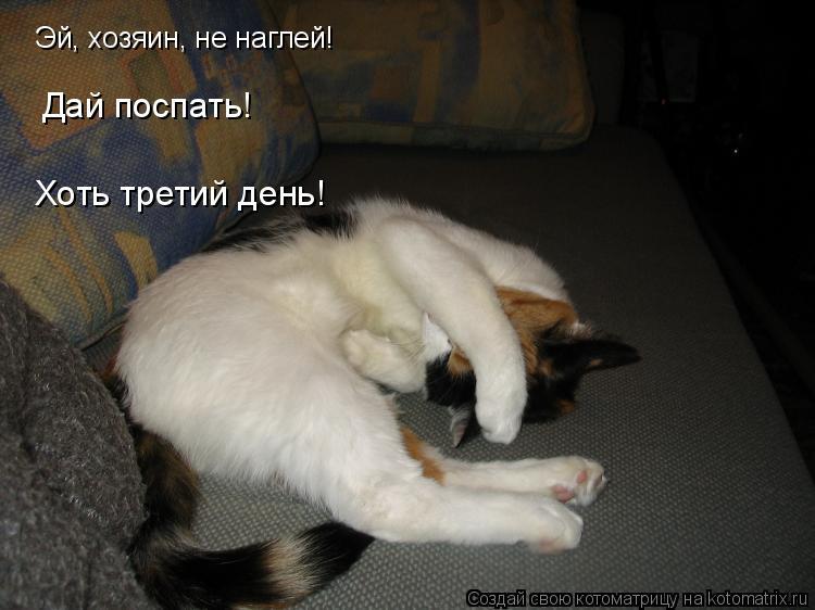 Котоматрица: Эй, хозяин, не наглей! Дай поспать! Хоть третий день!