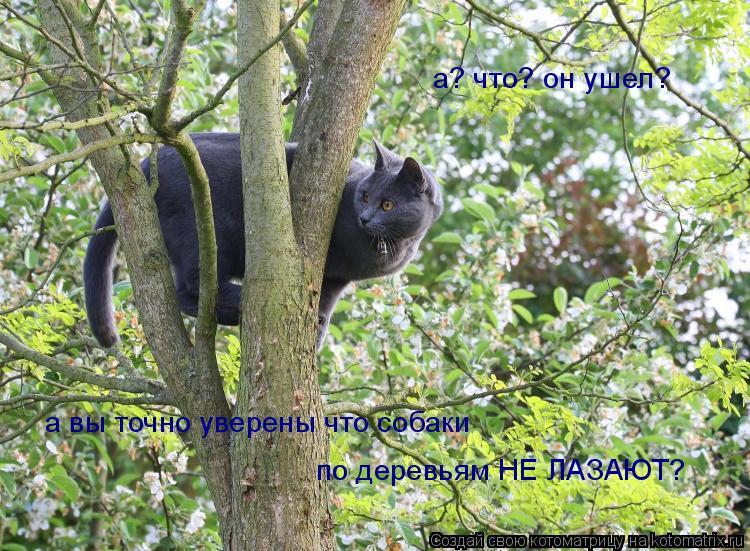 Котоматрица: а? что? он ушел?  а вы точно уверены что собаки  по деревьям НЕ ЛАЗАЮТ?