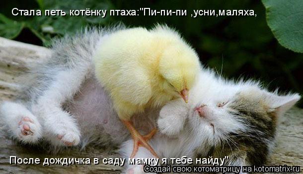"""Котоматрица: После дождичка в саду мамку я тебе найду"""". Стала петь котёнку птаха:""""Пи-пи-пи ,усни,маляха,"""