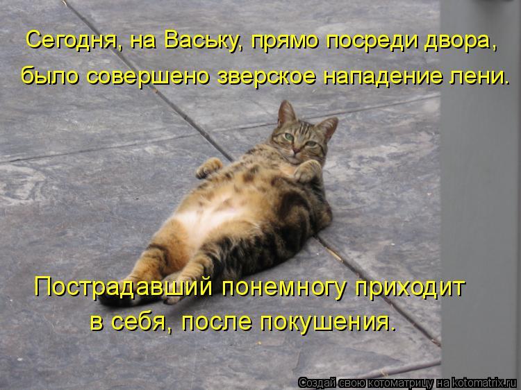 Котоматрица: Сегодня, на Ваську, прямо посреди двора,  было совершено зверское нападение лени. Пострадавший понемногу приходит  в себя, после покушения.