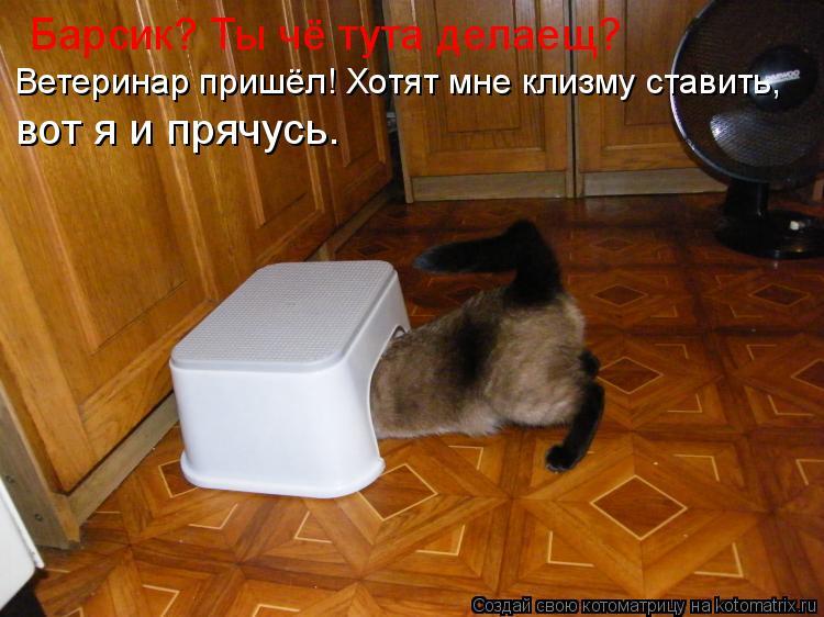 Котоматрица: Барсик? Ты чё тута делаещ? Ветеринар пришёл! Хотят мне клизму ставить, вот я и прячусь.