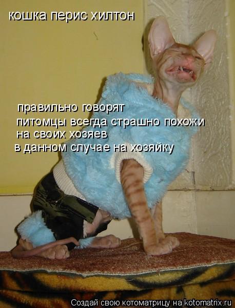 Котоматрица: кошка перис хилтон правильно говорят  на своих хозяев  питомцы всегда страшно похожи в данном случае на хозяйку