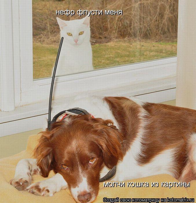 Котоматрица: нефр фпусти меня молчи кошка из картины