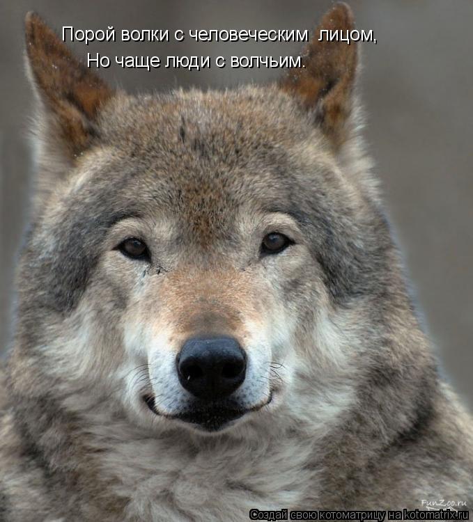 Котоматрица: Порой волки с человеческим  лицом, Но чаще люди с волчьим.