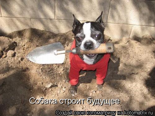 Котоматрица: Собака строит будущее