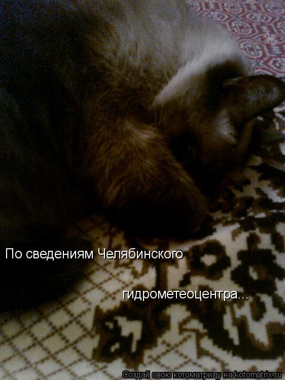 Котоматрица: По сведениям Челябинского  гидрометеоцентра...