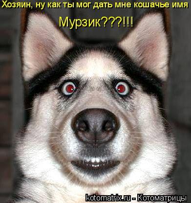 Котоматрица: Хозяин, ну как ты мог дать мне кошачье имя Мурзик???!!!