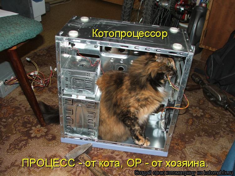 Котоматрица: Котопроцессор ПРОЦЕСС - от кота, ОР - от хозяина.