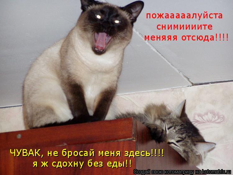 Котоматрица: пожааааалуйста снимиииите ЧУВАК, не бросай меня здесь!!!! я ж сдохну без еды!! меняяя отсюда!!!!