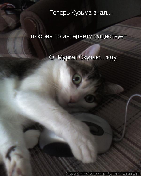 Котоматрица: Теперь Кузьма знал... любовь по интернету существует О, Мурка! Скучаю...жду
