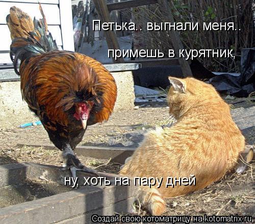 Котоматрица: Петька.. выгнали меня.. примешь в курятник,  ну, хоть на пару дней