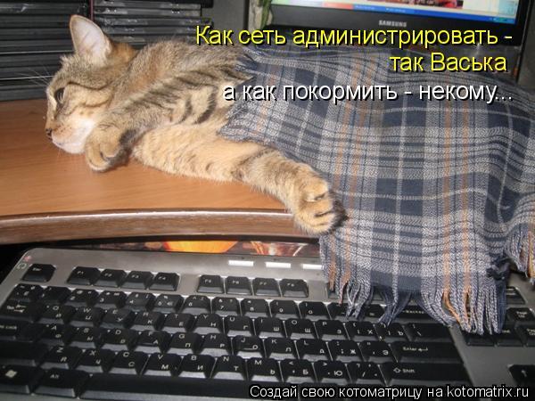 Котоматрица: Как сеть администрировать -  так Васька а как покормить - некому...