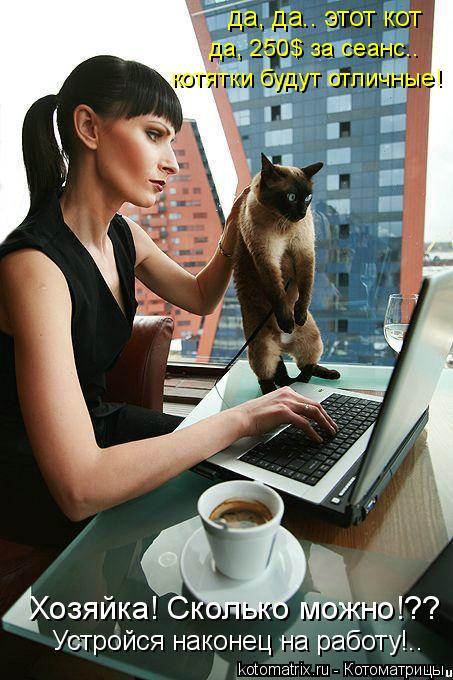 Котоматрица: да, да.. этот кот да, 250$ за сеанс.. котятки будут отличные! Хозяйка! Сколько можно!?? Устройся наконец на работу!..