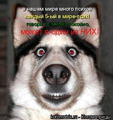 Котоматрица: в нашем мире много психов  каждый 5-ый в мире-псих! говори со мной спокойно, может я-один из НИХ!