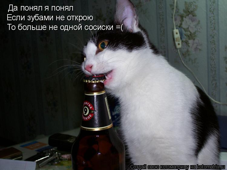 Котоматрица: Да понял я понял Если зубами не открою То больше не одной сосиски =(