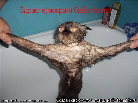 Котоматрица: Здрасте(мокрая) баба Настя!