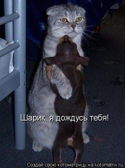 Котоматрица: Шарик, я дождусь тебя! Шарик, я дождусь тебя!