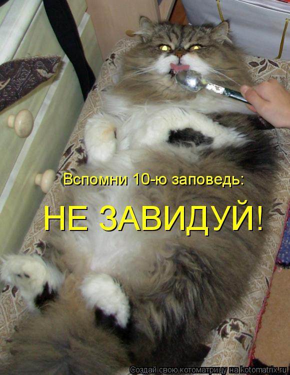 Котоматрица - Вспомни 10-ю заповедь: НЕ ЗАВИДУЙ!