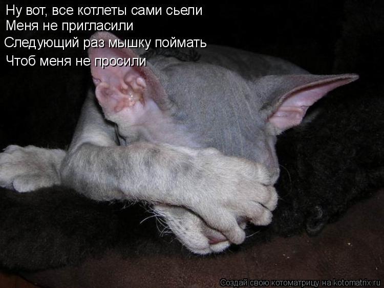 Котоматрица: Ну вот, все котлеты сами сьели Меня не пригласили Следующий раз мышку поймать Чтоб меня не просили