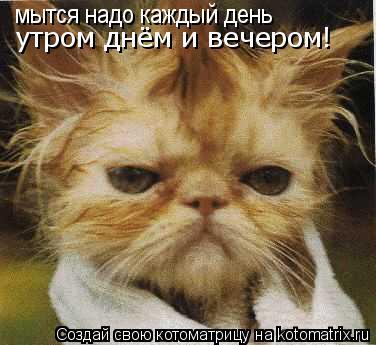 Котоматрица: мытся надо каждый день мытся надо каждый день утром днём и вечером!
