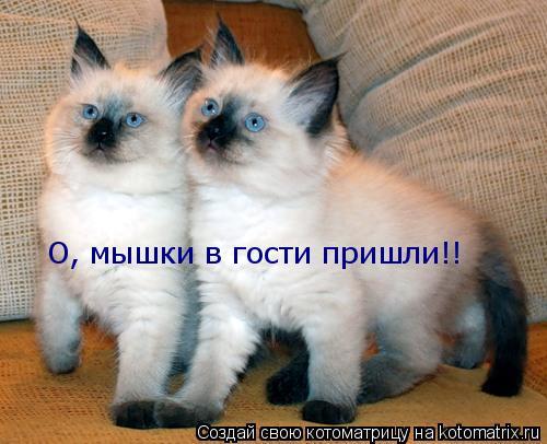 Котоматрица: О, мышки в гости пришли!!