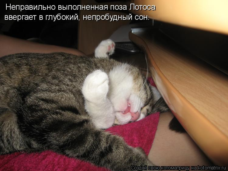 Котоматрица: Неправильно выполненная поза Лотоса  ввергает в глубокий, непробудный сон.