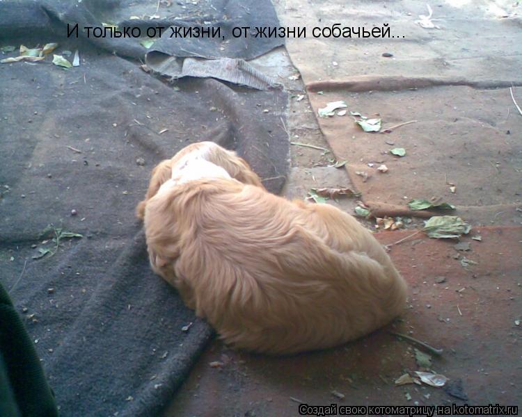 Котоматрица: И только от жизни, от жизни собачьей...