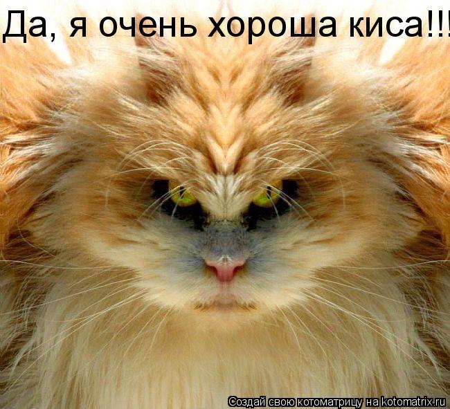 Котоматрица: Да, я очень хороша киса!!!