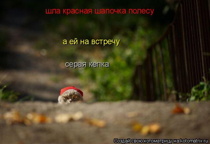 Котоматрица: шла красная шапочка полесу а ей на встречу серая кепка